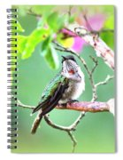Img_ 6761  - 10x8 Spiral Notebook