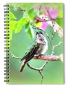 Young Ruby - 6761- 8x10 Spiral Notebook