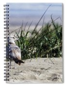 Young Seagull No. 1 Spiral Notebook