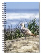 Young Seagull No. 2 Spiral Notebook