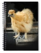 Young Silkie Spiral Notebook