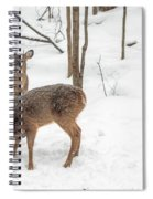 Young Spike Buck And Doe Whitetail Deer In Snowy Woods Spiral Notebook