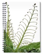 Young Spring Fronds Of Silver Tree Fern On White Spiral Notebook
