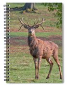 Young Stag Spiral Notebook