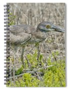 Young Yellow-crowned Night Heron Spiral Notebook
