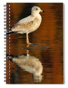 Youthful Reflections Spiral Notebook