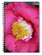 Yuletide Camelia Spiral Notebook