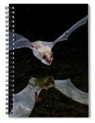 Yuma Myotis Bat Spiral Notebook