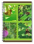 Zabulon Skipper Butterfly - Poanes Zabulon Spiral Notebook