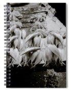 Zanzibar Fish Spiral Notebook