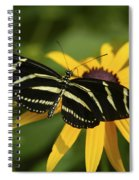 Zebra Butterfly Spiral Notebook