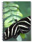 Zebra Butterfly Spiral Notebook
