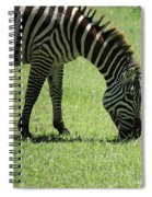 Zebra Eating Grass Spiral Notebook