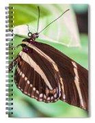 Zebra Iv Spiral Notebook