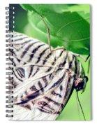 Zebra Long-wing Close-up Spiral Notebook