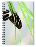 Zebra Longwing Butterflies Mating Spiral Notebook