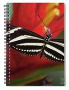 Zebra Longwing Butterfly Spiral Notebook
