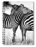 Zebra Love Spiral Notebook