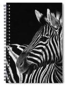Zebra No. 3 Spiral Notebook
