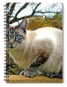 Zing The Cat In The Fall Spiral Notebook