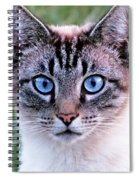 Zing The Cat Looking At Us Spiral Notebook