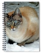 Zing The Cat On The Porch In The Snow 2 Spiral Notebook