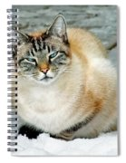 Zing The Cat On The Porch In The Snow Spiral Notebook