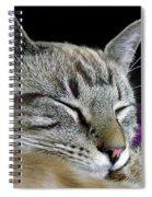 Zing The Cat Sleeping Spiral Notebook