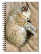 Zing The Kitten Spiral Notebook