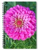 Zinnia - Pink Spiral Notebook