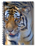 Zootography3 Tiger Prowl Close-up Spiral Notebook
