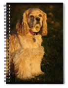 American Cocker Spaniel Spiral Notebook