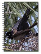 Boat-tailed Grackle - Quiscalus Major Spiral Notebook
