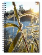Frost On Willow At Sunrise Spiral Notebook