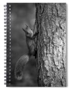 Red Squirrel In Bw Spiral Notebook