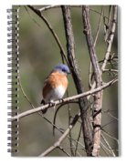 Sucarnoochee River - Bluebird Spiral Notebook