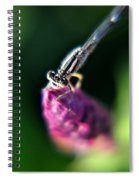 0002 Dragonfly On A Salvia Burgundy Candle Spiral Notebook