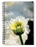0002 Leucanthemum Cog Hill Awakening  Spiral Notebook