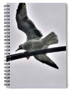 001 Gull To Out Do Wallenda Spiral Notebook
