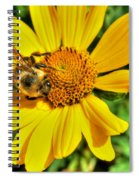 003 Busy Bee Series Spiral Notebook