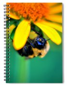 003 Sleeping Bee Series Spiral Notebook