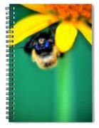 004 Sleeping Bee Series Spiral Notebook