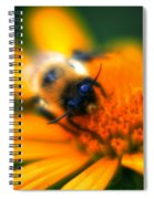 007 Sleeping Bee Series Now Awake   Ovo Spiral Notebook