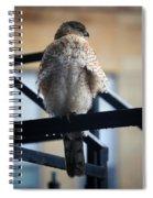 01 Falcon  Spiral Notebook