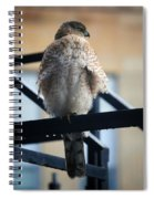 02 Falcon Spiral Notebook