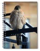 03 Falcon Spiral Notebook