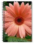 04-19-09 Gerbera Daisy Spiral Notebook