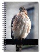 04 Falcon Spiral Notebook