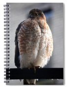 06 Falcon Spiral Notebook