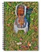 06 Grey Squirrel Sciurus Carolinensis Series Spiral Notebook